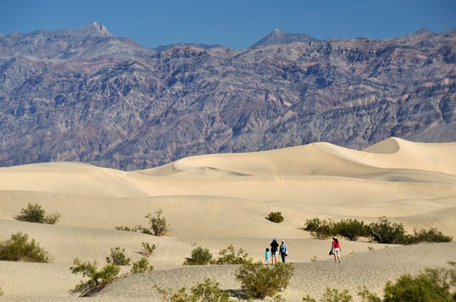 mosquito_sand-dunes_death_valley