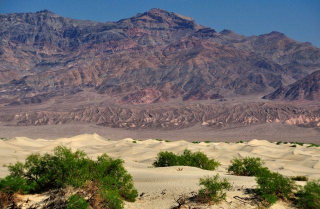 mosquito_sand_-dunes2_death_valley