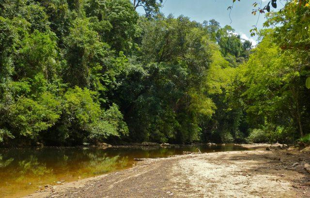 taman-negara_malajzia