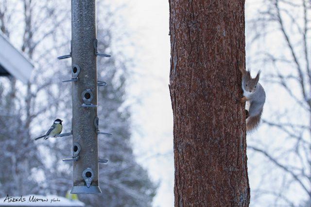 pasvik-nemzeti-park_norvegia_03