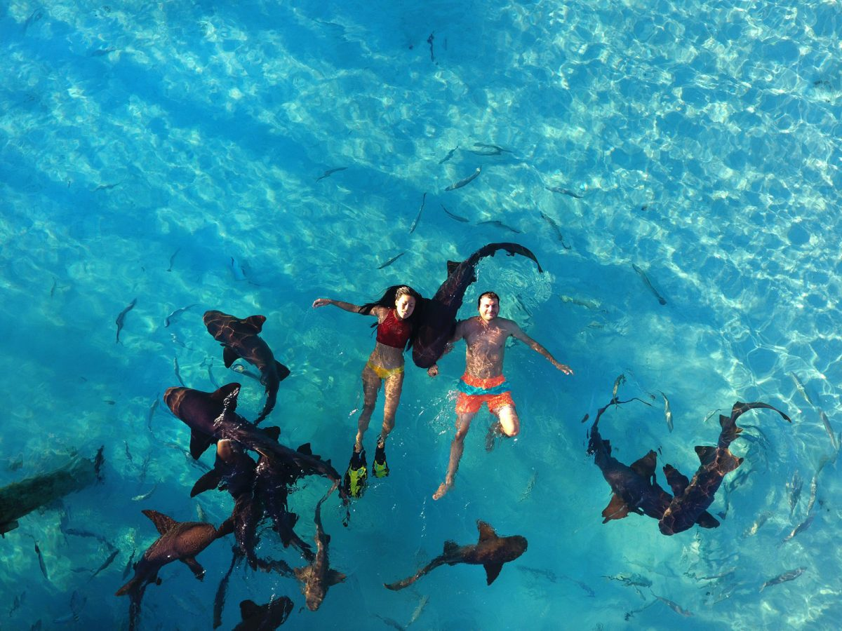 Heidi Hong and Ryan Blackstock floating with sharks at Exuma Pig Beach in Big Major Cay, Exuma Cays, Bahamas as seen on Travel Channel's Top Secret Beaches episode TTSB103H.