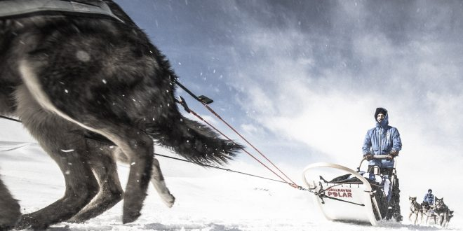 300 kilométeres sarkköri kaland kutyaszánon – jelentkezz a Fjällräven Polar 2018-ra