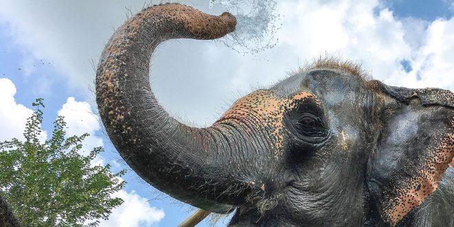 Színfalak mögött: turizmus, orvvadászat, illegális állatkereskedelem – a világutazó újságíró tapasztalatai testközelből